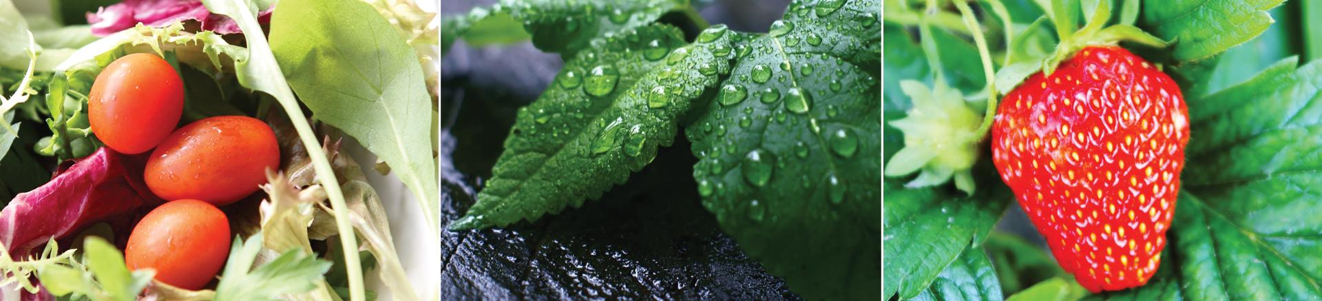PlantsandVegtables